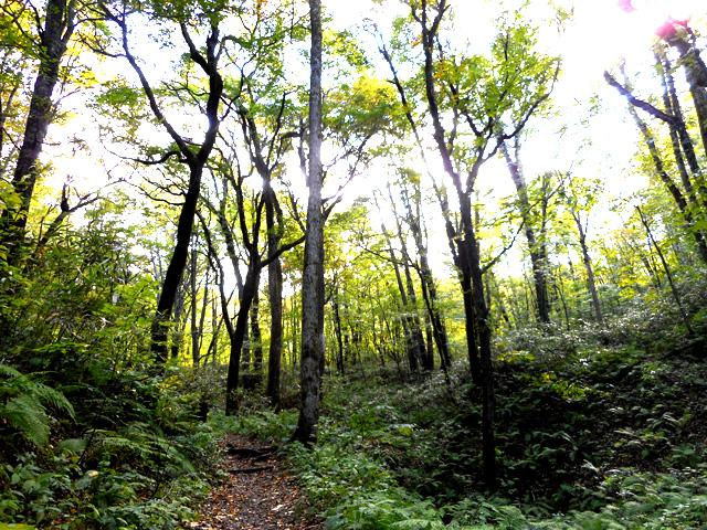 森の中はマインドフルネス瞑想で自然そのものを感じる絶好の場
