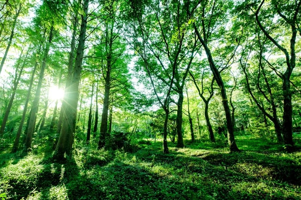 森林浴は手軽に出来る電磁波対策