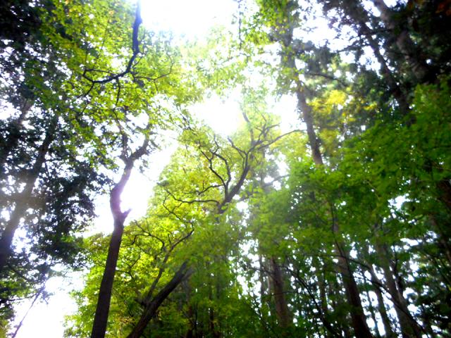 森林浴とフィトンチッド、マインドフルネスが、アトピー改善につながる