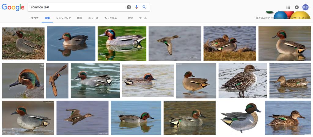 コガモの検索結果