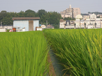 f:id:izumibashi:20110813090439j:image