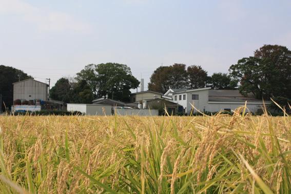 f:id:izumibashi:20111112150722j:image:w360