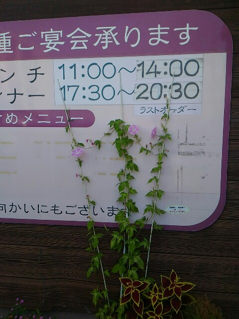 f:id:izumihudousan2007:20190916053448j:image