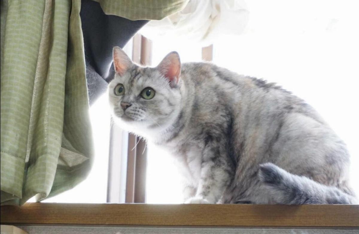 パステルサビ 保護猫