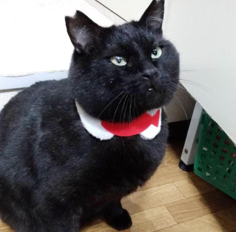 くまちゃん風の黒猫 保護猫