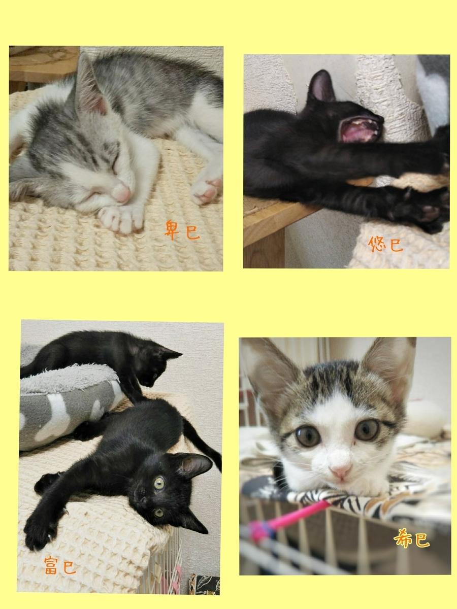 保護猫 子猫 黒猫 サバ白