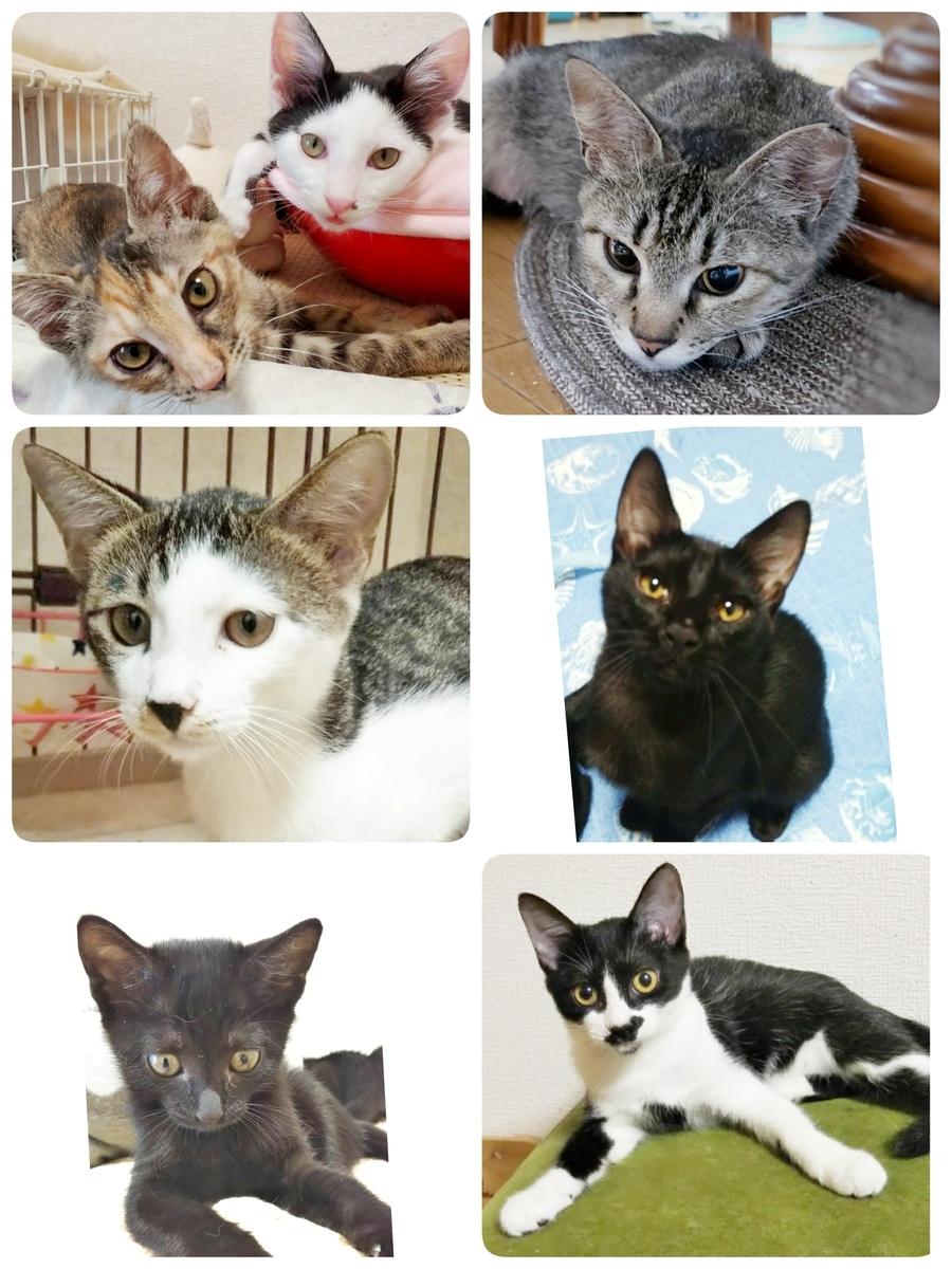 保護猫 和泉市