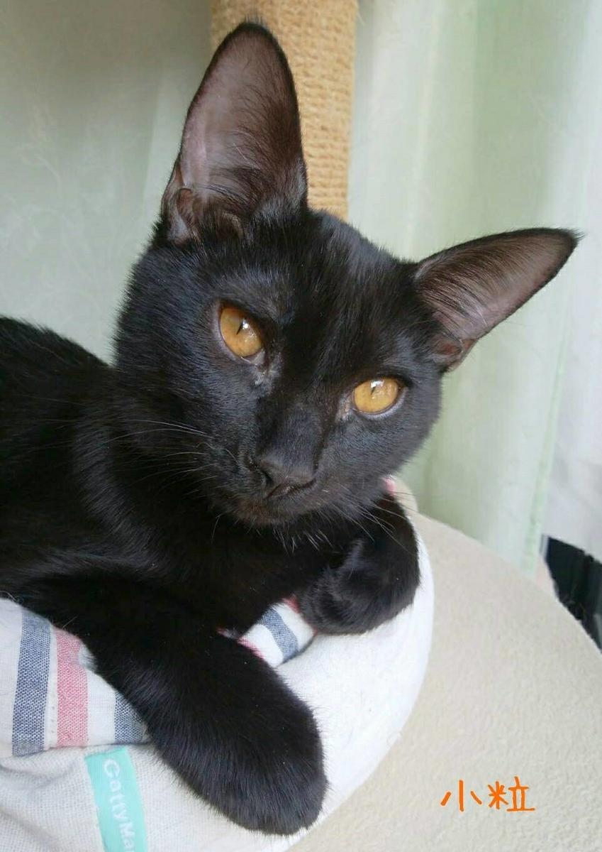 保護猫 黒猫
