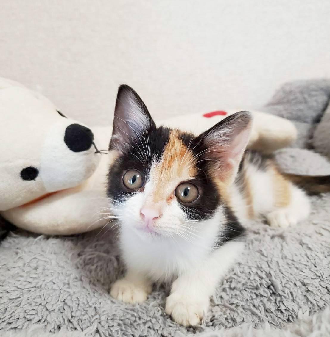 保護猫 三毛猫 子猫