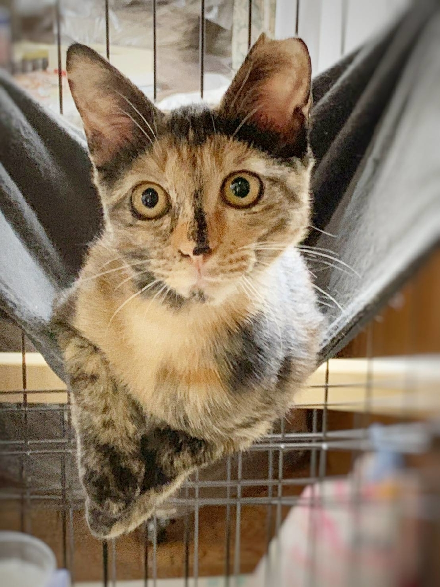 保護猫 サビ猫 子猫