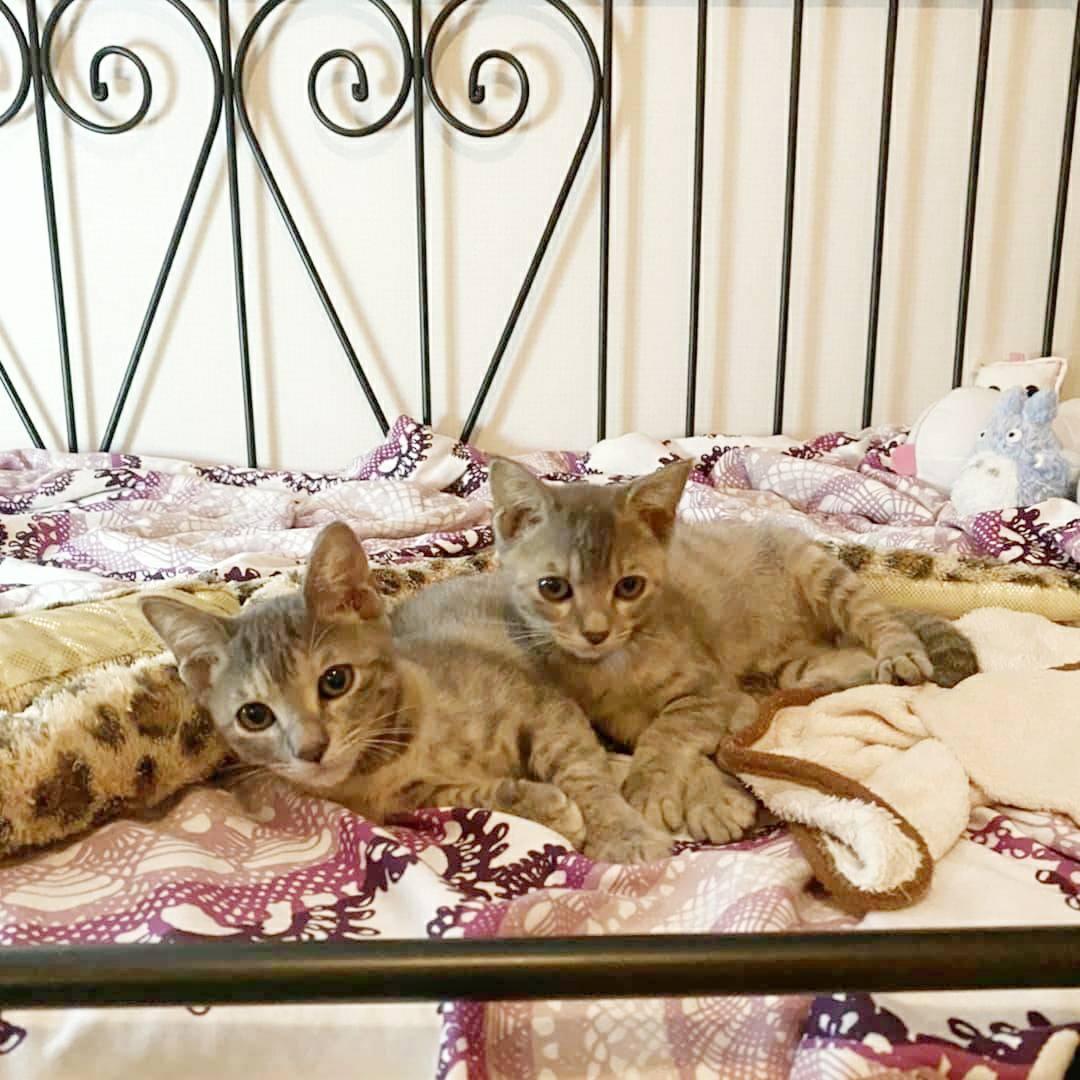 保護猫 子猫 サバトラ