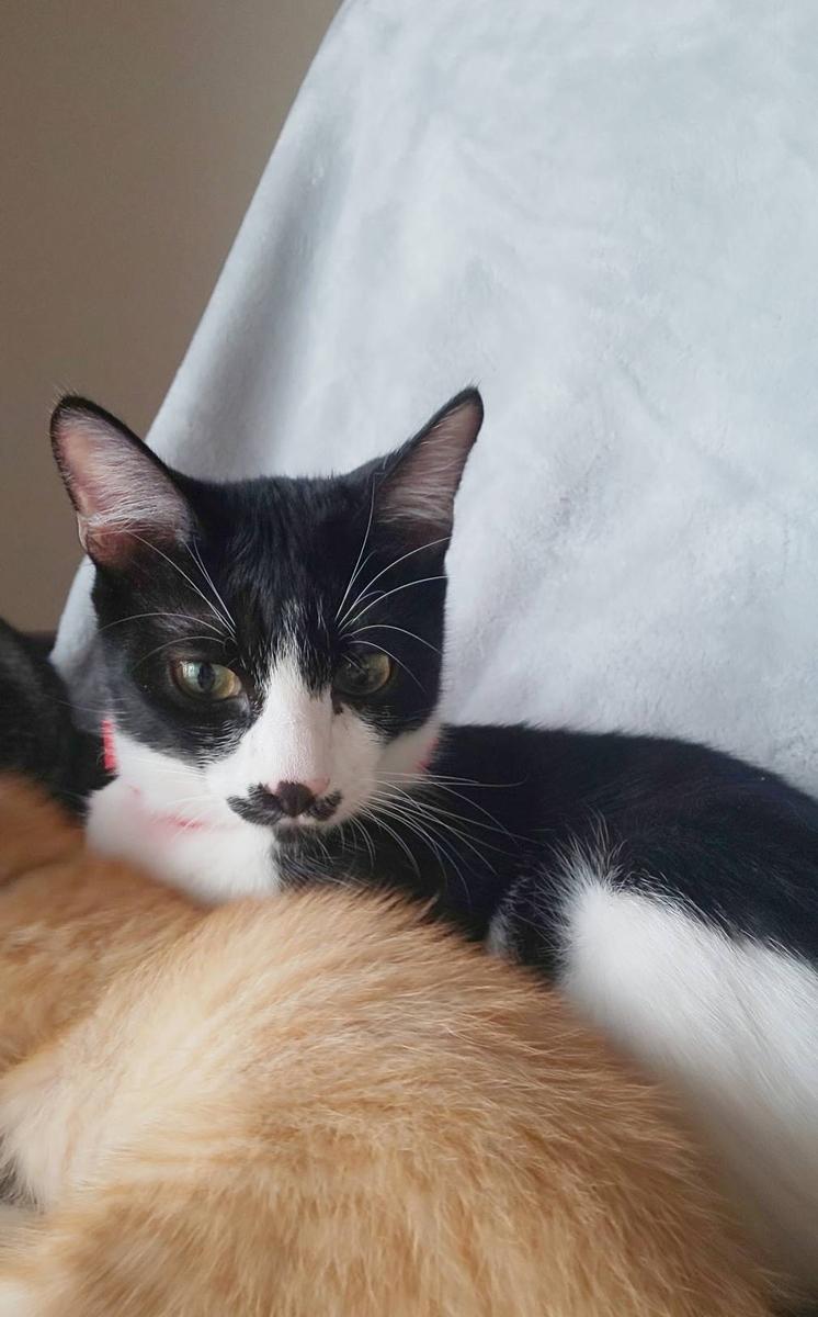 保護猫 白黒
