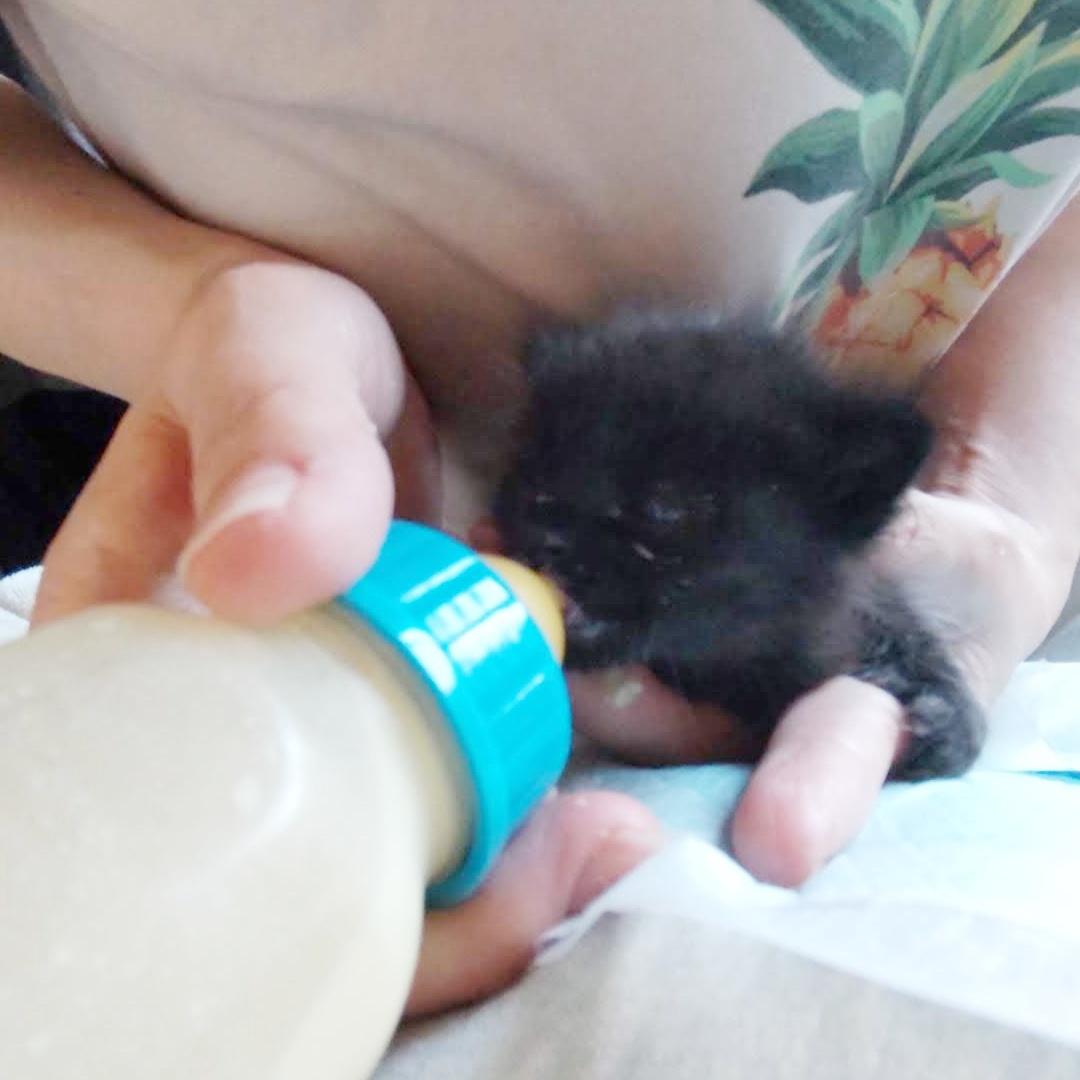 保護猫 子猫 ミルクボランティア