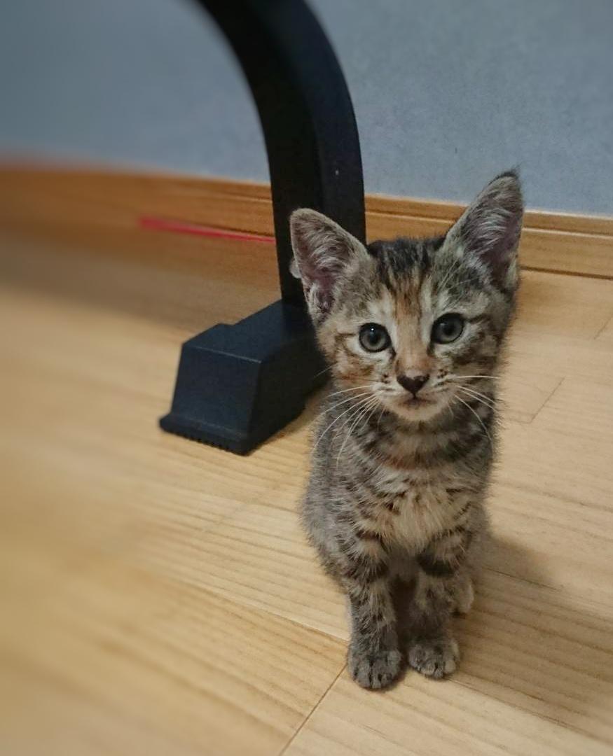 保護猫 子猫