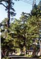 「御油」の松並木