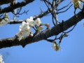 春が来た・2