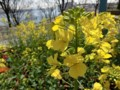 春が来た・1