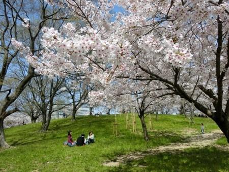 2018年の桜・3