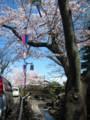 [桜][花見][夜桜]