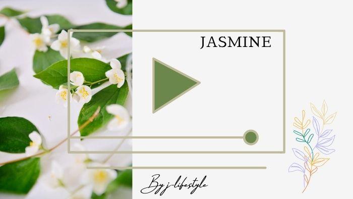 JASMINEの人気曲5選