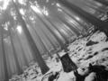京都新聞写真コンテスト 愛宕残雪