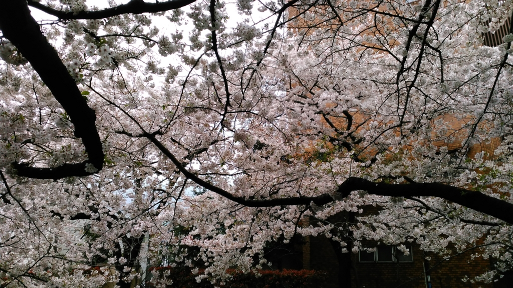 f:id:j_furusawa:20170409163225j:plain
