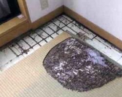 木製の家具や畳まで食害されてしまうことも