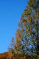 青空に残月