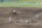 [済々黌][野球][藤崎台]