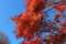[紅葉][日塩もみじライン][日光][塩原][那須塩原]