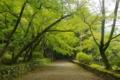 『京都新聞写真コンテスト 毘沙門堂(山科)』