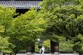 『京都新聞写真コンテスト 日本の夏、京都の夏』