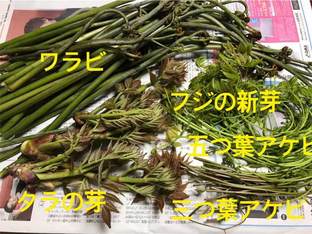 f:id:japajin:20180416041507j:image