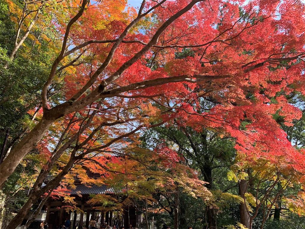 f:id:japajin:20191119125336j:image