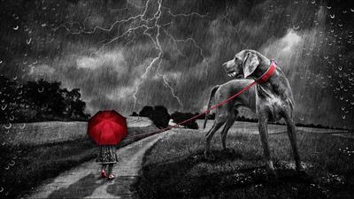 大型犬のレインコートは何がオススメ?レインコート選びの失敗談ご紹介:chiefukuro.com: