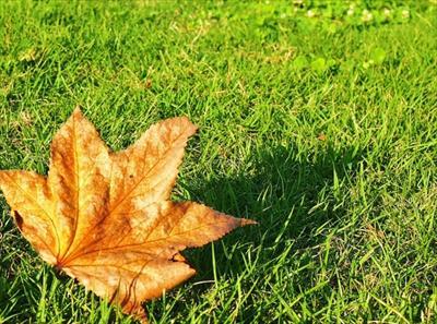 2016年の立秋はいつ?8月7日の立秋は何を食べると良い日なの?