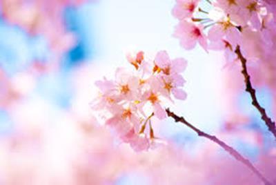 春に向けてのダイエット開始!長く続けられるダイエットはやっぱり美甘麗茶を飲むだけダイエット