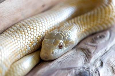 蛇の抜け殻で金運アップ