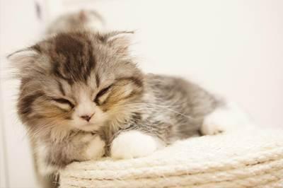 江原啓之さんの言葉!十分な睡眠がスピリチュアルエネルギーに必要な事についてのお話