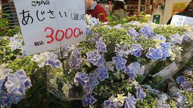 f:id:japandrive:20190505193716j:image