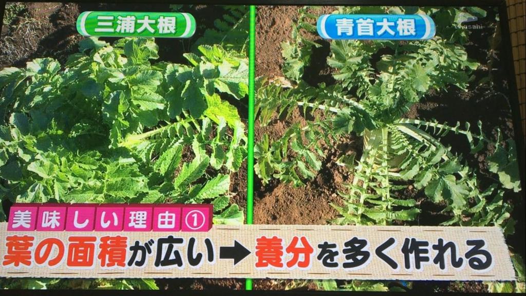 f:id:japanese-standard0:20170115184424j:plain