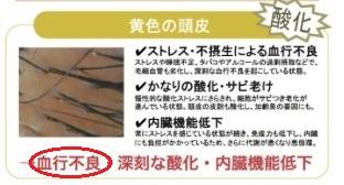 f:id:japanese-standard0:20170212211109j:plain