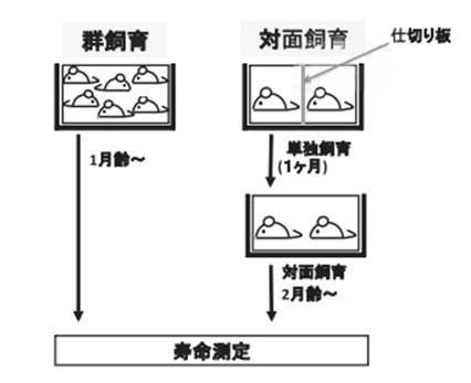 f:id:japanese-standard0:20200604184237p:plain