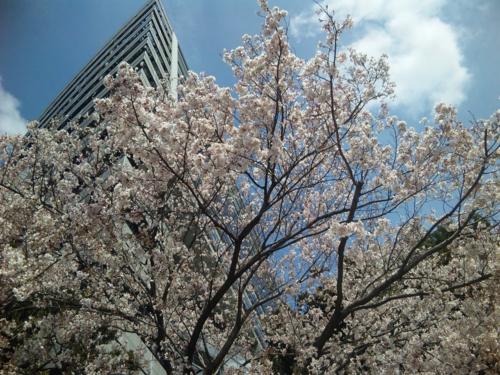 f:id:japanfoundation:20100401135348j:image