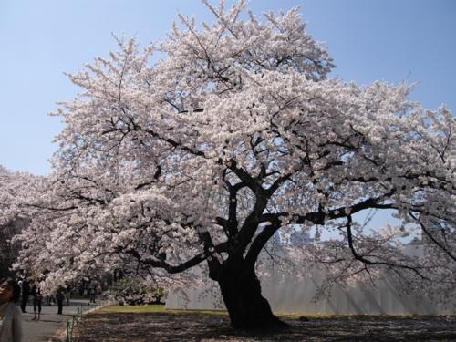 f:id:japanfoundation:20100401141316j:image