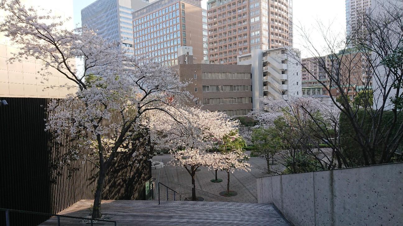 f:id:japanrabbit:20210405200532j:image