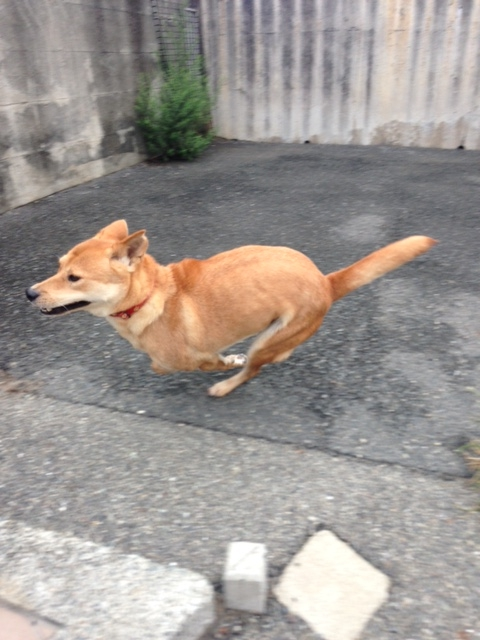 f:id:japanrescue1995:20160715083108j:plain