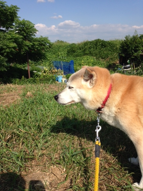 f:id:japanrescue1995:20160729154215j:plain