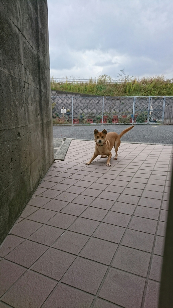 f:id:japanrescue1995:20161115193540j:plain