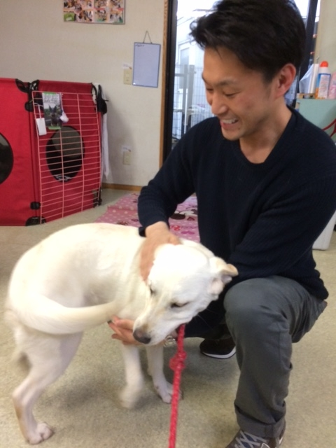 f:id:japanrescue1995:20170407165820j:plain